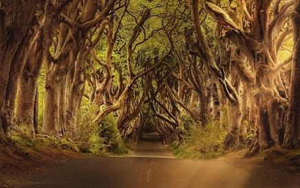 Usefulness of Trees